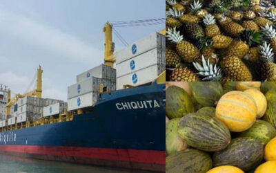 fruit & vegetables delivered in top condition